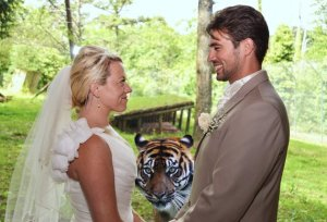 tiger wedding